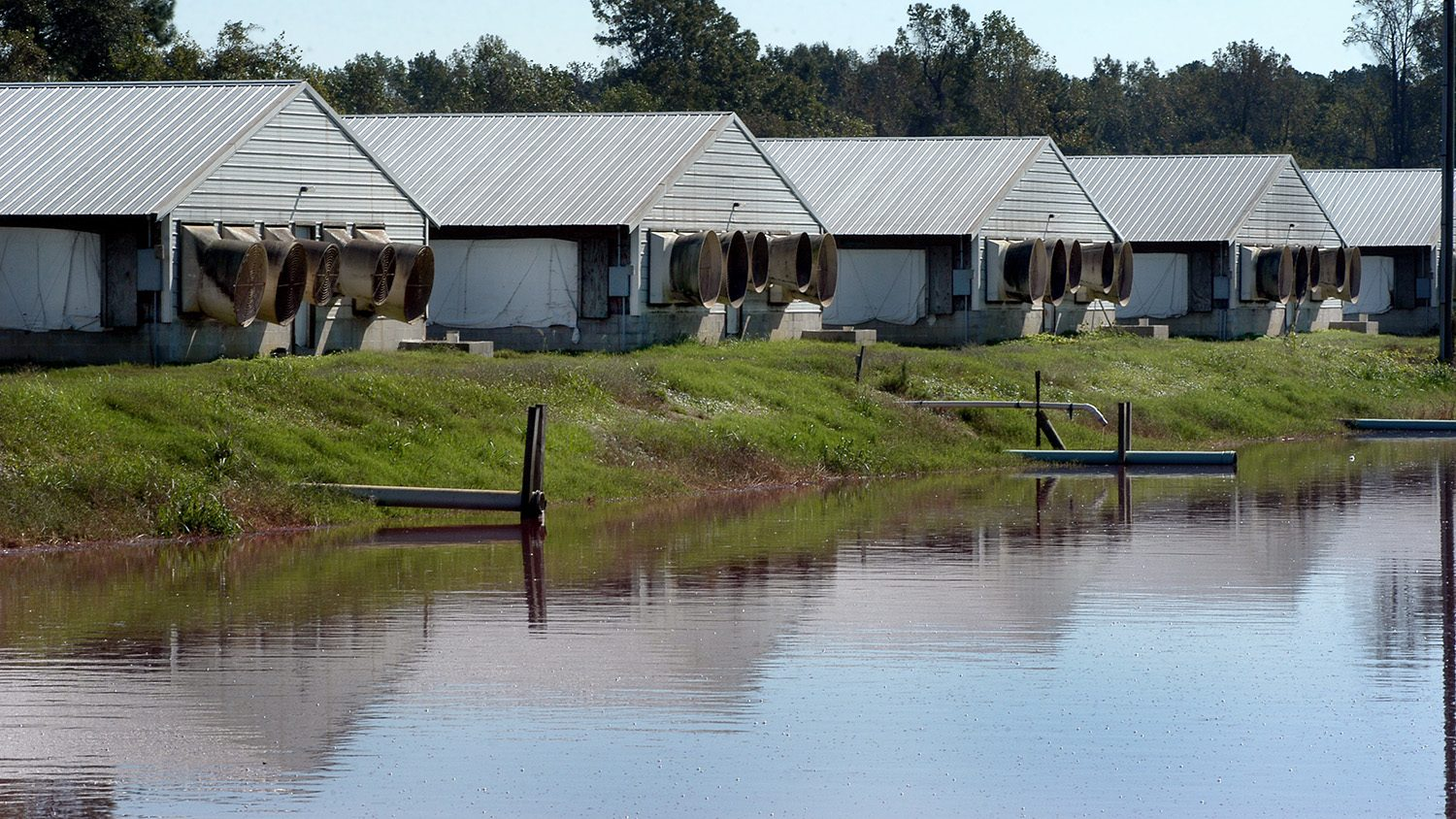 Waste lagoon and hog houses on a farm outside of Kinston.