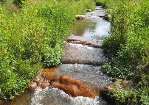 stream through field