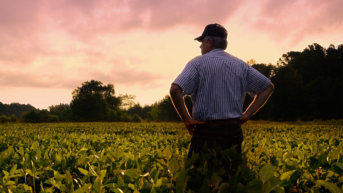 Farmer out standing in his soybean field.