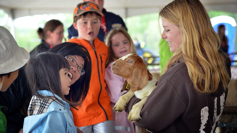 Scene from Farm Animal Days