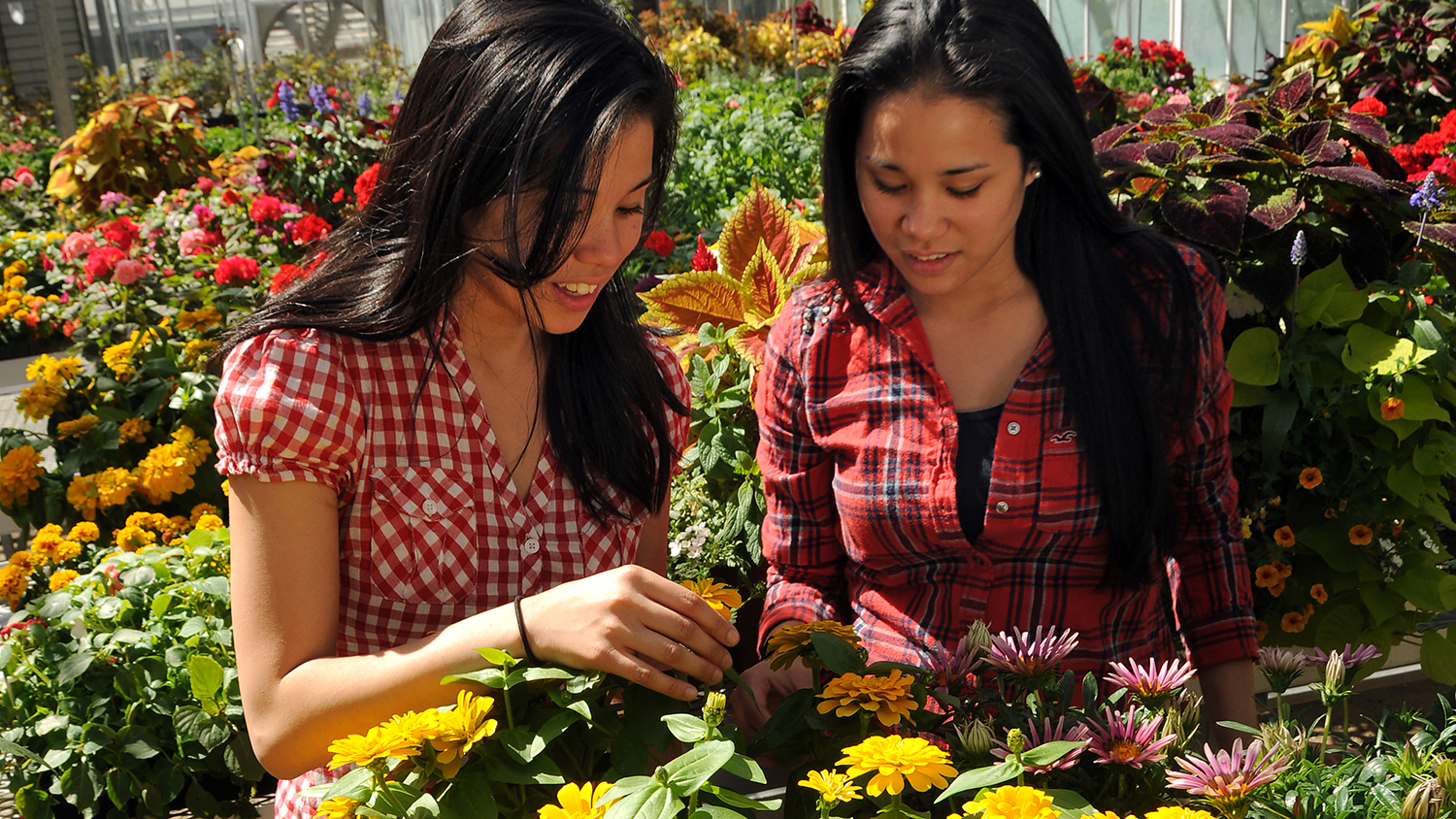 Students in Fox Labs greenhouse