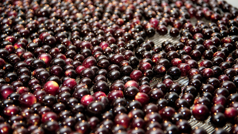 Grapes on a conveyor