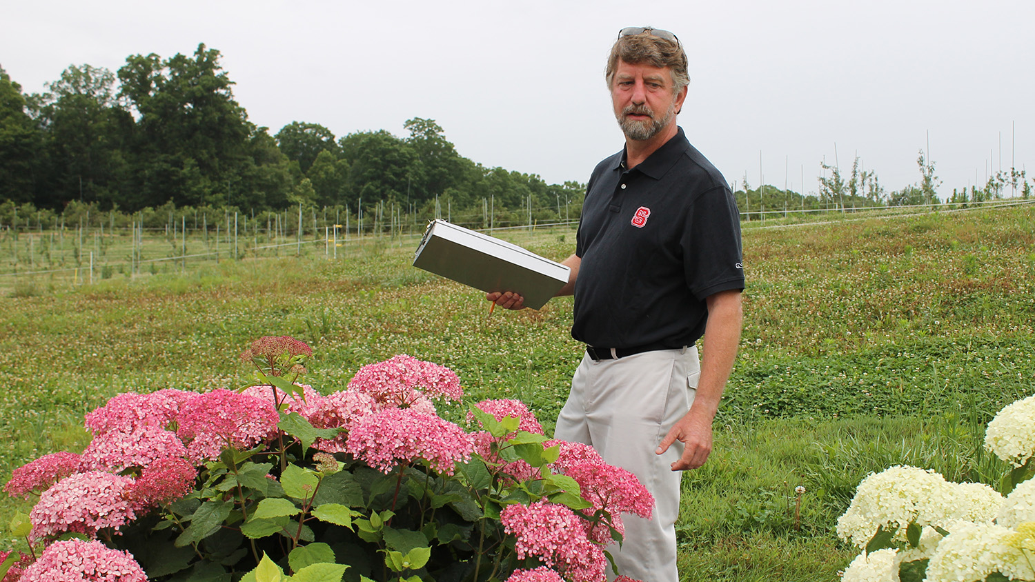 Tom Ranney outside with pink and white hydrangeas.