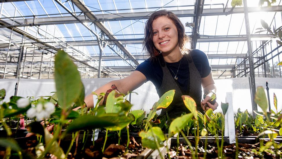 Ashley Yow, plant breeding graduate student, analyzing her latest greenhouse research.