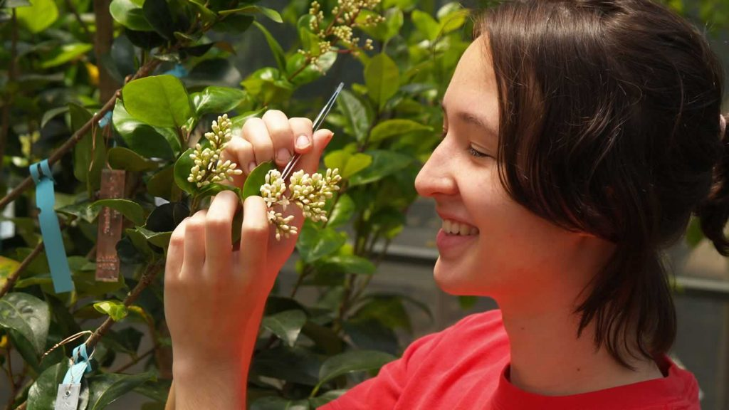 Student Irene Palmer counting seeds