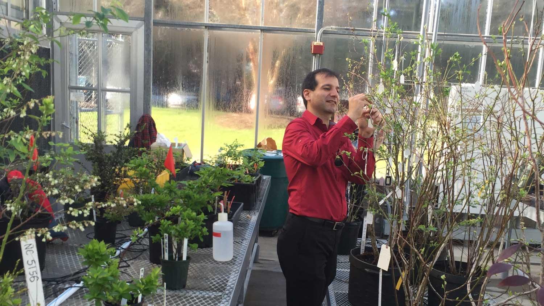 Dr. Ashrafi, blueberry breeder and genomicist