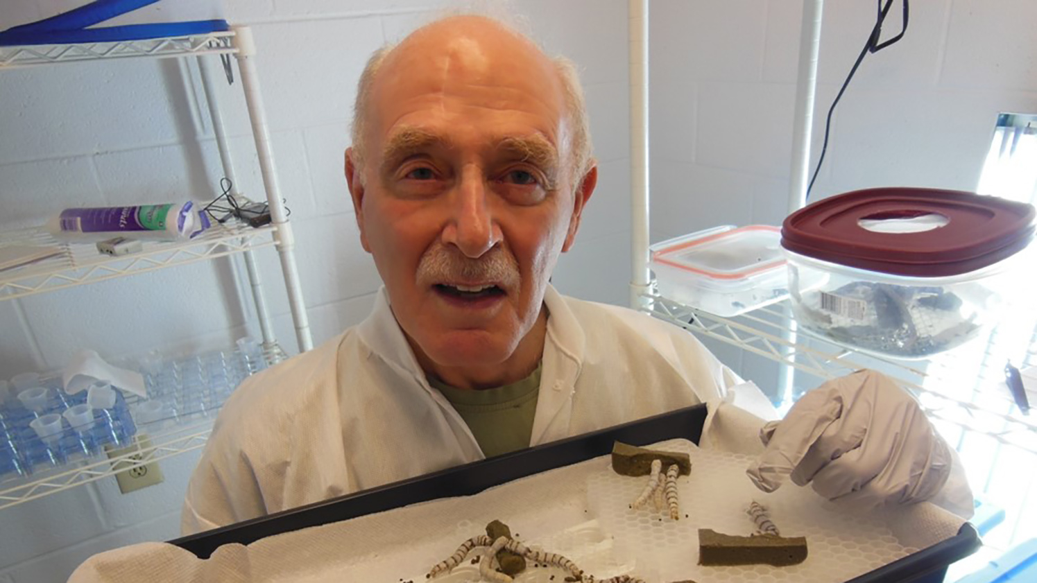 Pictured in his lab, Allen Cohen holds a tray of silkworms.