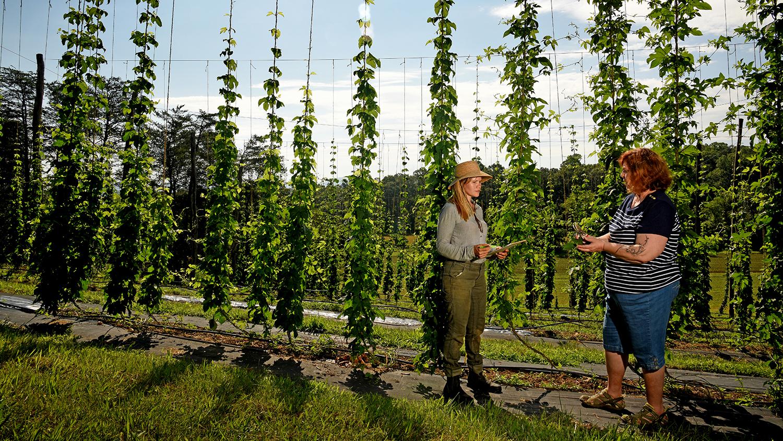 Two women talking in a hops yard.