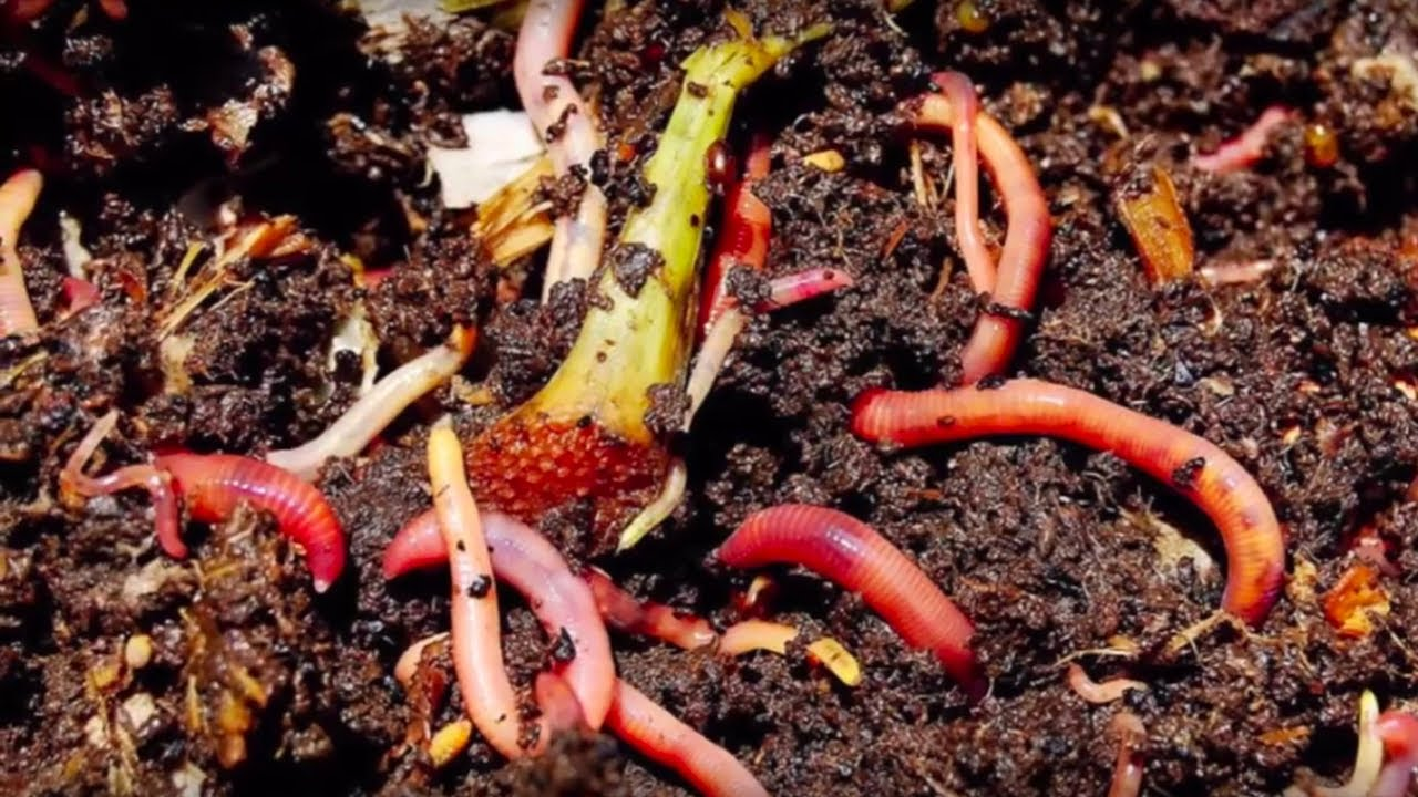 NC State 20th Annual Vermicomposting Conference