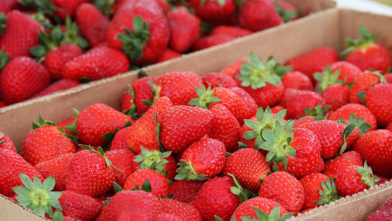 Strawberries in cartons