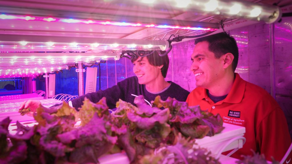 Two men looking at plants inside a large container garden with purple lights.