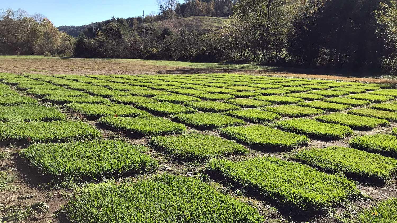 turfgrass research plots