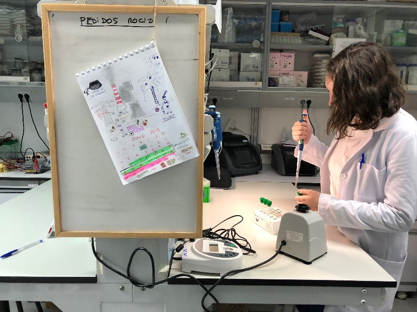 Kirby working in the lab