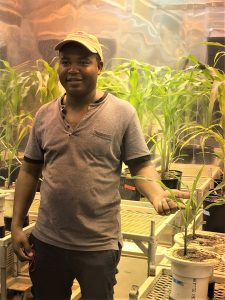 Borlaug Fellow Hamilton Chiango, Assistant Lecturer and Researcher, Universidade Eduardo Mondiane - Mozambique with his project in the NC State Phytotron