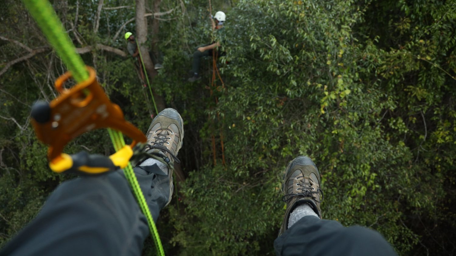 A photographer's view from the top of a tree canopy