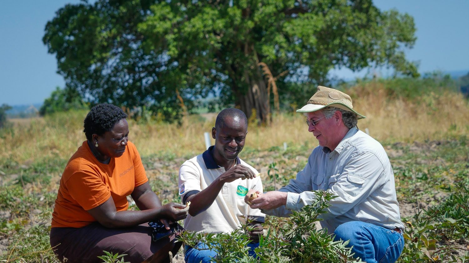 NC State Sweetpotato expert Dr. Craig Yencho crouches in a field in Uganda with Ugandan trainees
