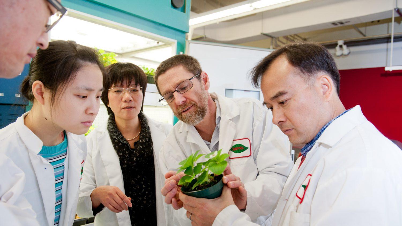 NC State laboratory team examines a plant