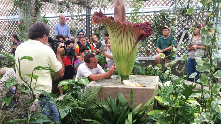 visitors looking at the corpse flower.