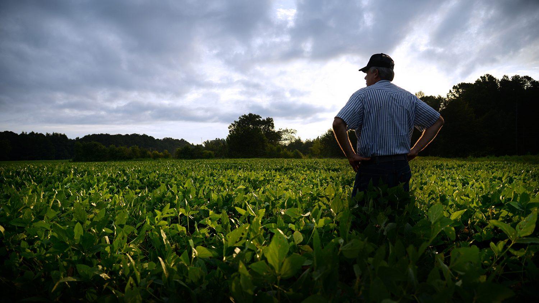 farmer looking over field