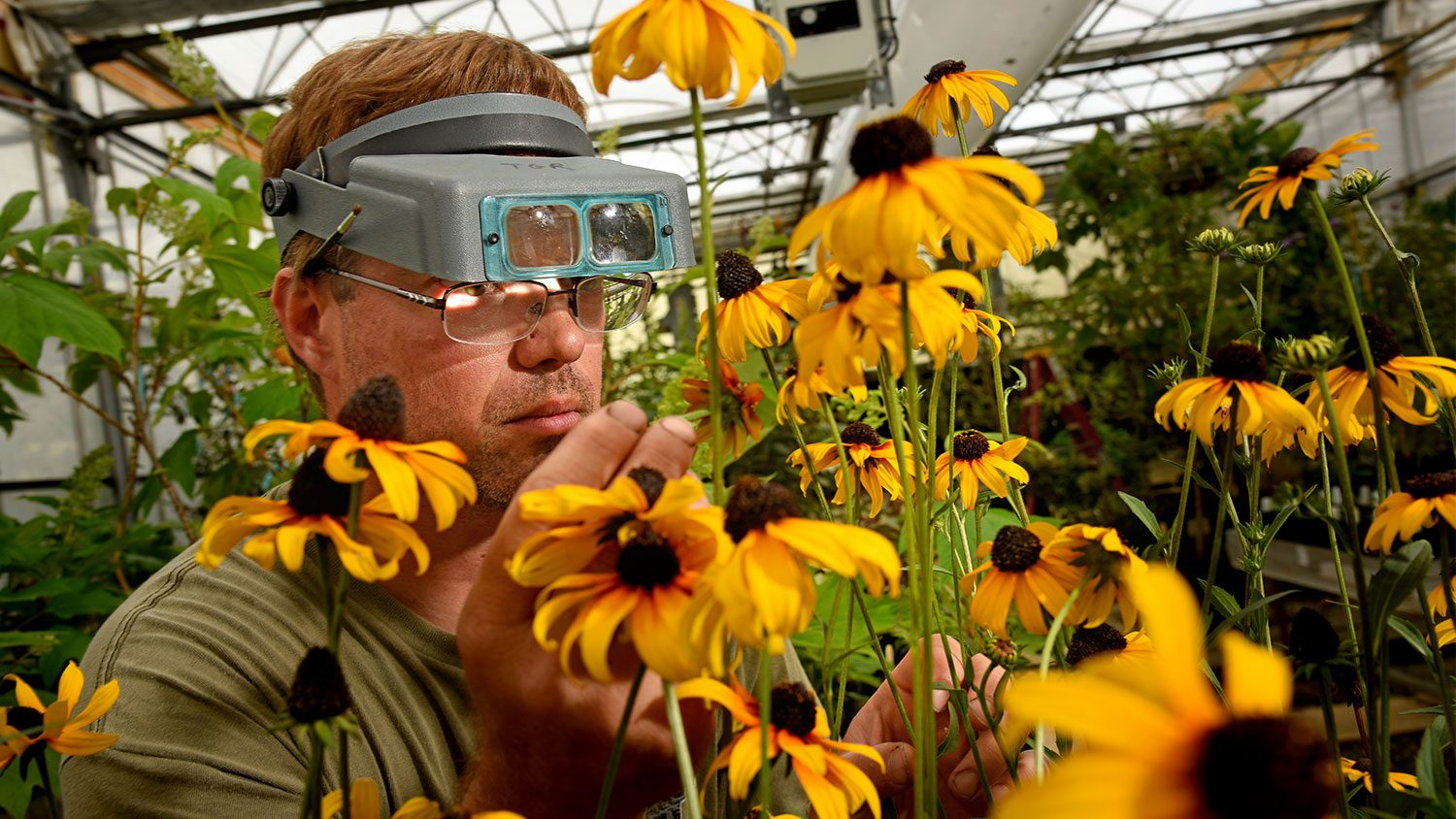 Scientist with glasses looking at flower