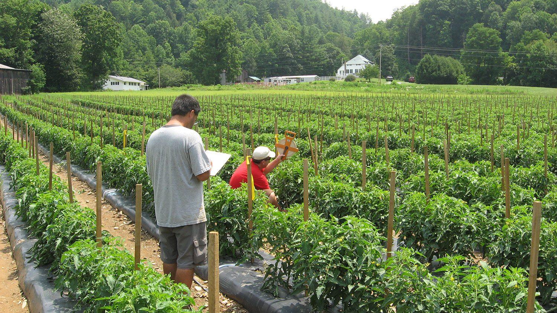 Two men recording data on a small mountain farm.