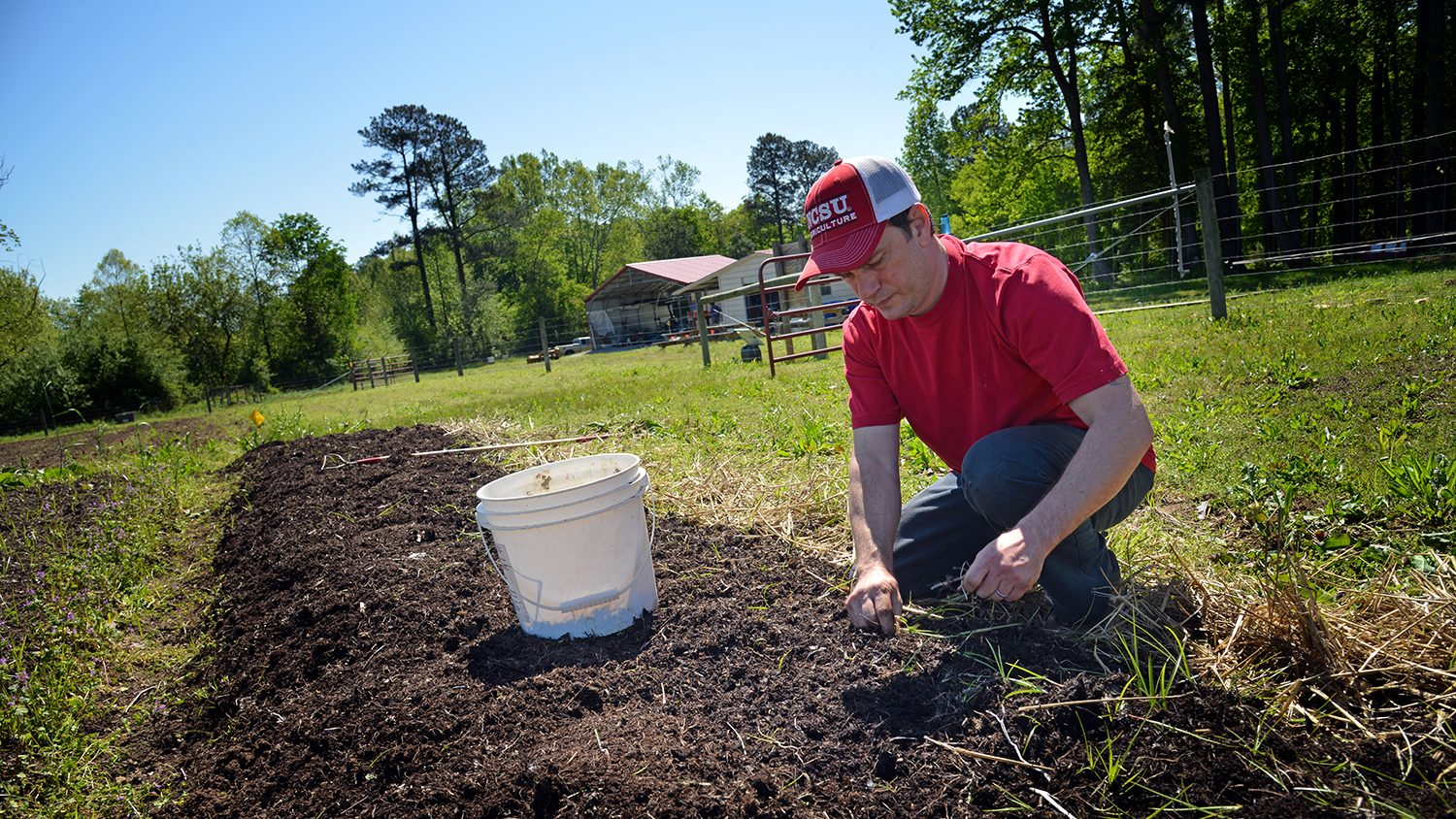 Soil sciences student weeds his section of garden at the Agroecology Farm.