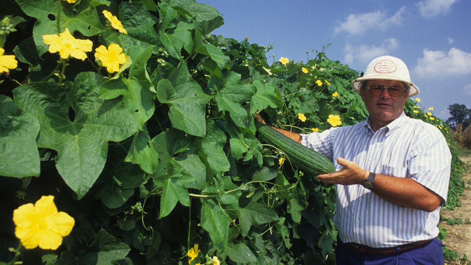 Farmer stands with Luffa Gourds