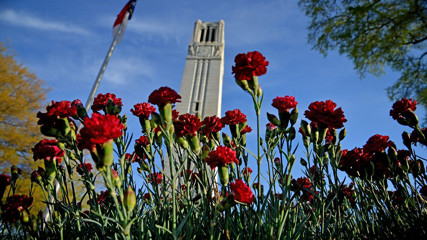Red carnations in the foreground with the Belltower in the background.