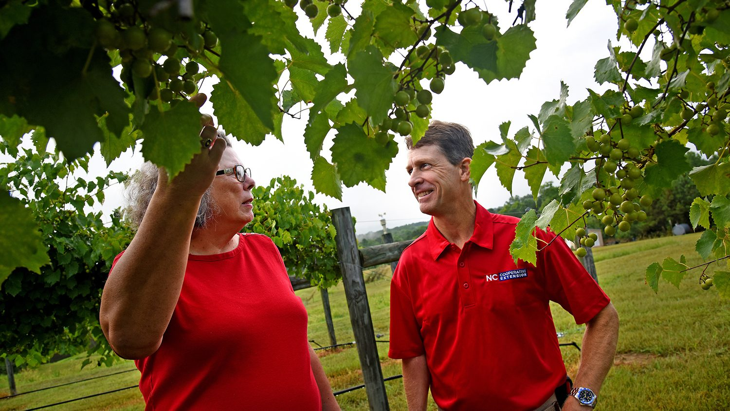 White woman and man in red shirts looking at a wine grape vine