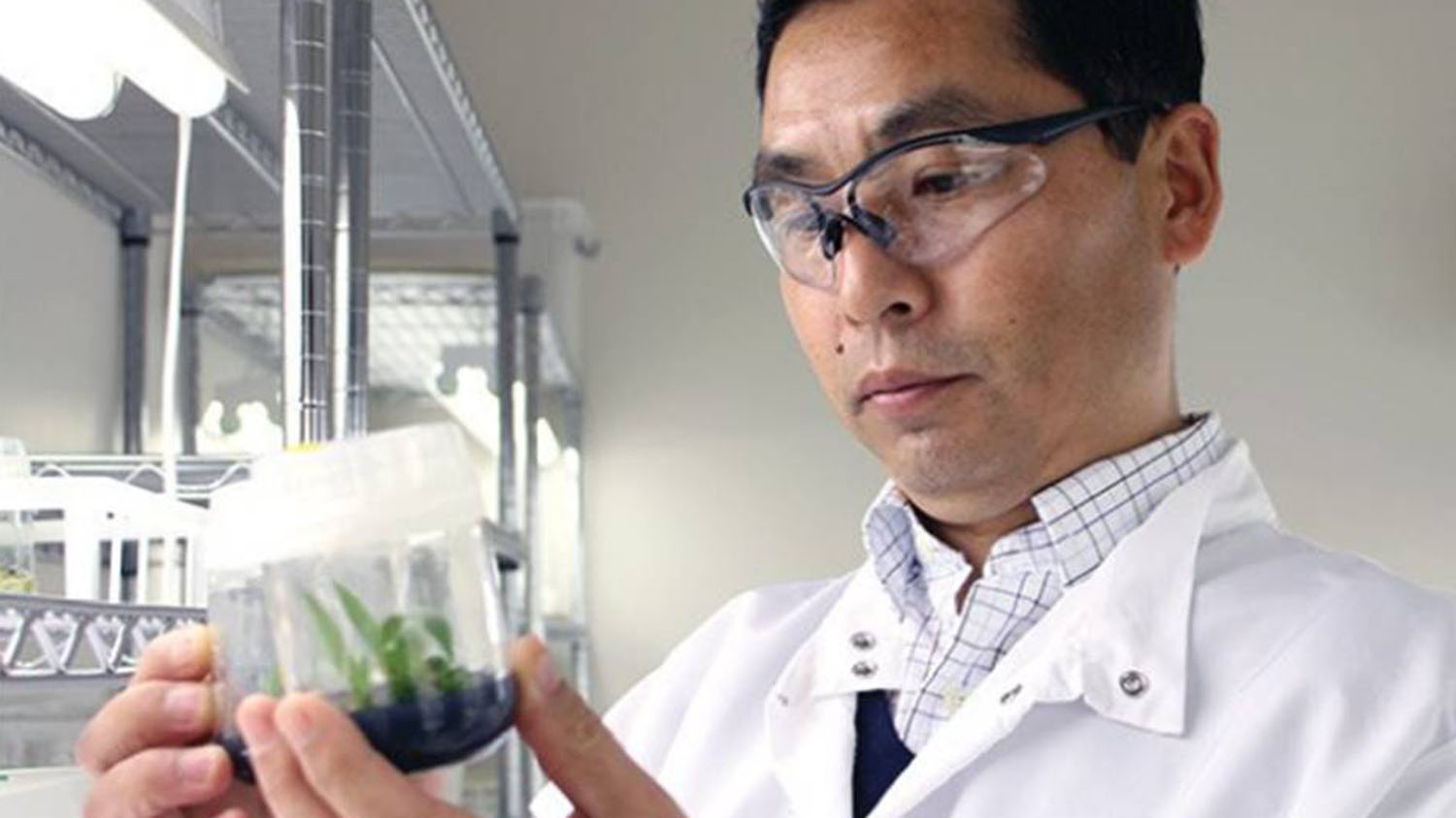 Kedong Da holds plant in a bright lab.