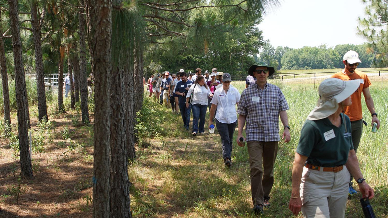 People walking in a tree-lined field