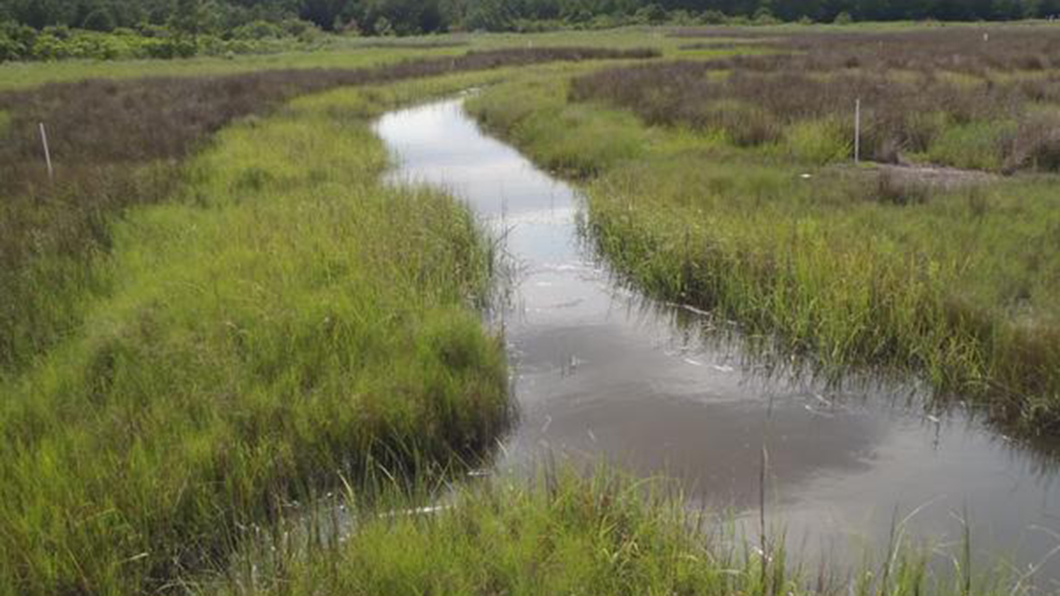A constructed wetland