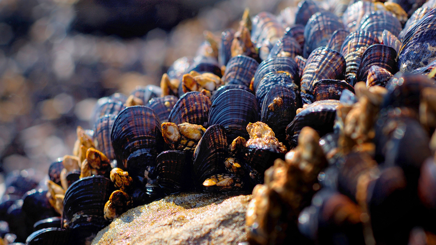 Image of mollusks