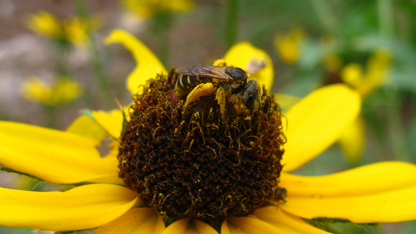 close up of insect sitting on a daisy