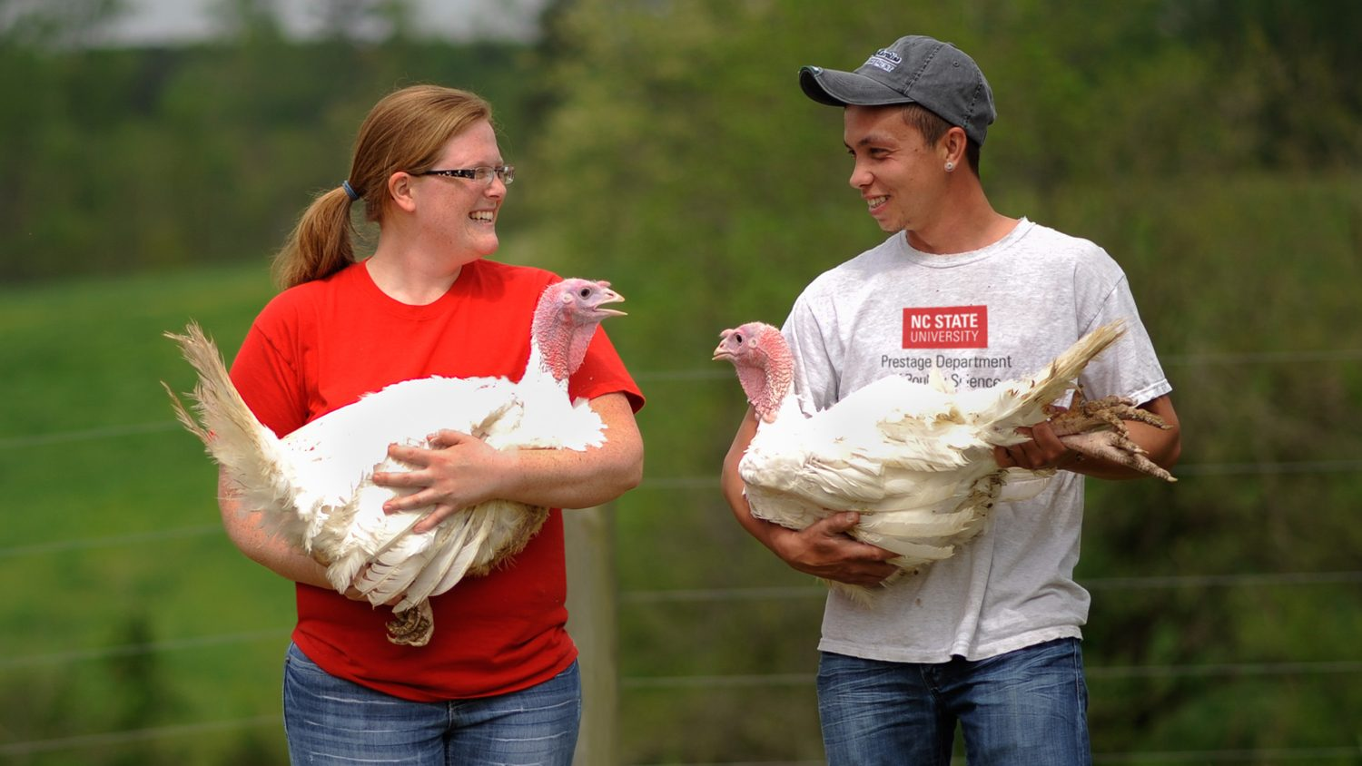 Prestage Dept of Poultry Science students with turkeys at NC State's Lake Wheeler Farms facility