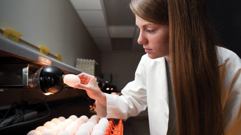 Prestage student Susan Jones looking at eggs.