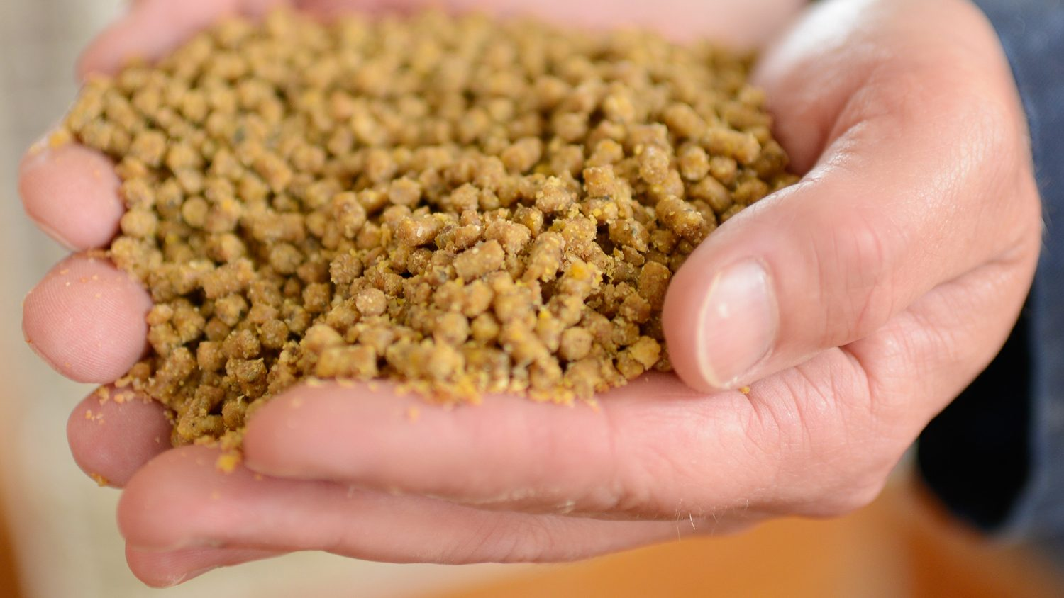 Close-up of man's hand filled with poultry feed.