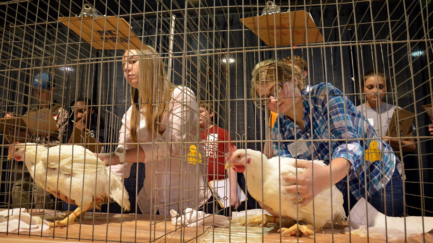 Youth participating in a poultry judging contest.