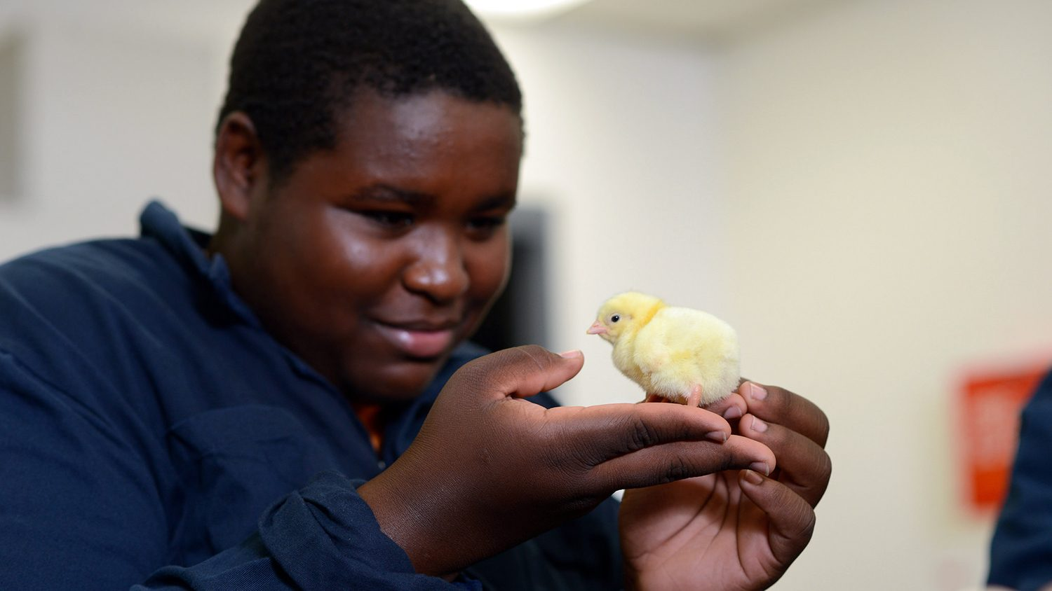 At NC State's CALS, student with chick at Poultry Science Summer Institute
