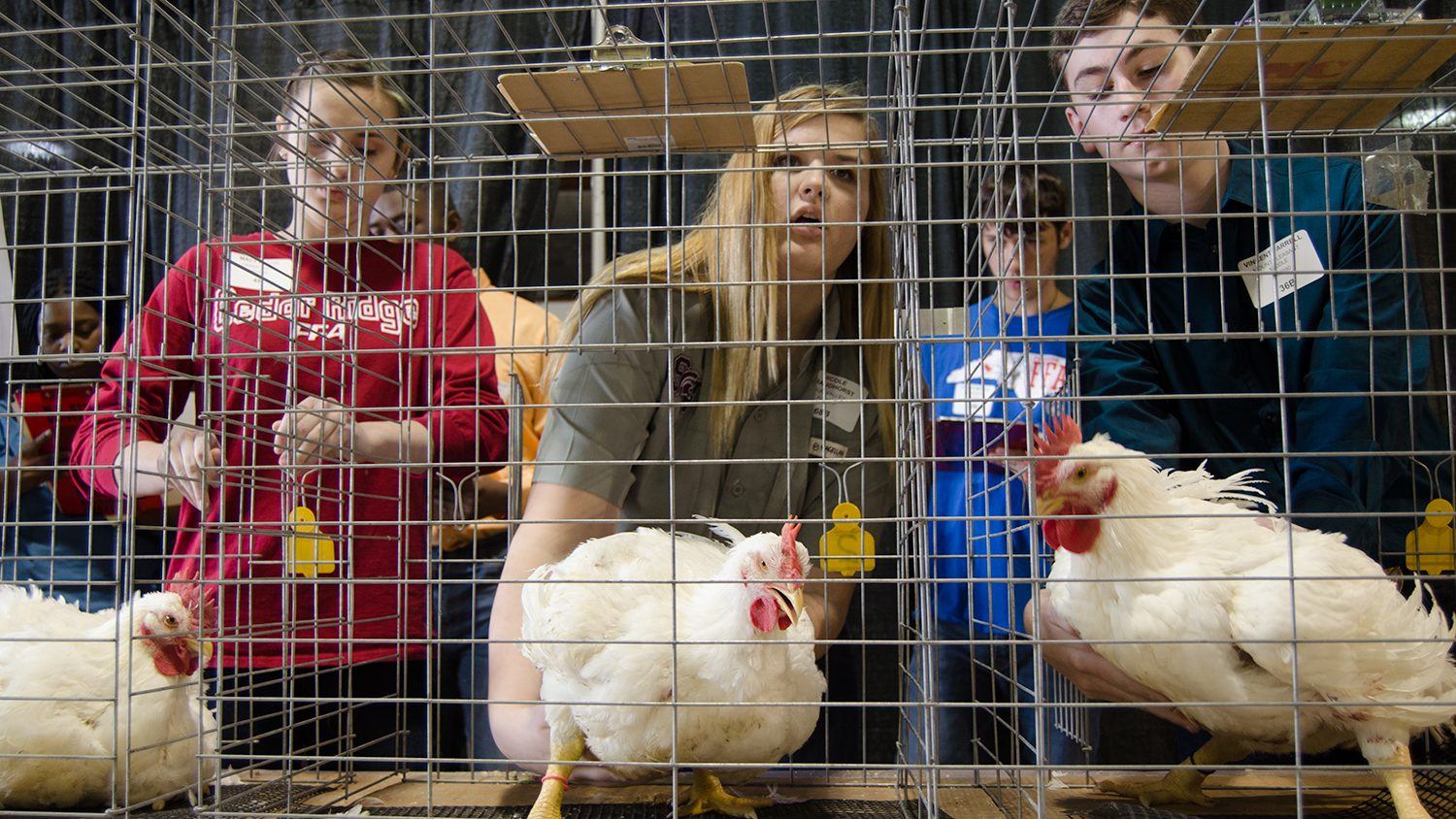 FAA students judging chickens