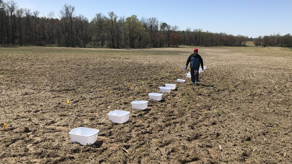 a man walks down a row of plastic buckets in a field