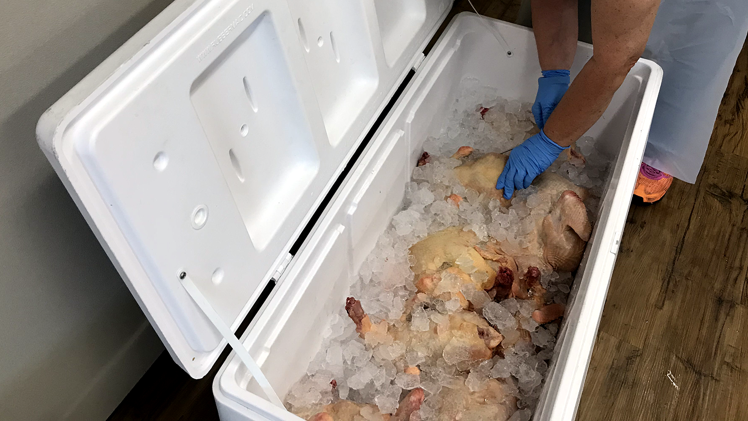 picture looking down into an open ice chest with whole chickens in it