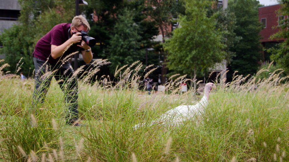a photographer taking a picture of a white turkey hen in tall grass