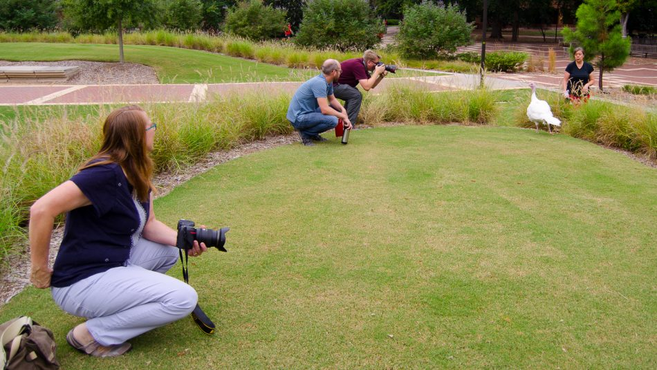 two photographers on grass with a white turkey hen