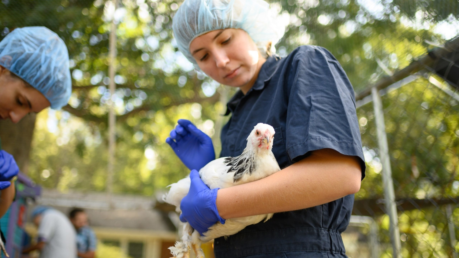 a student in PPE holds a chicken