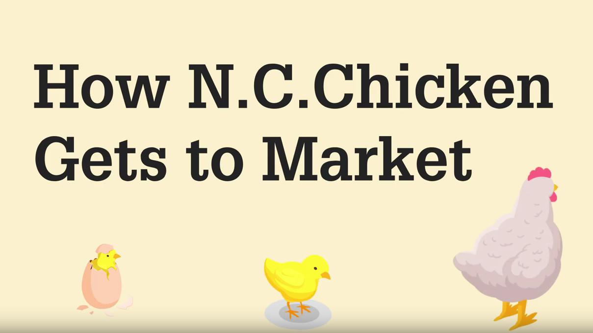 Title slide with text How N.C. Chicken Gets to Market