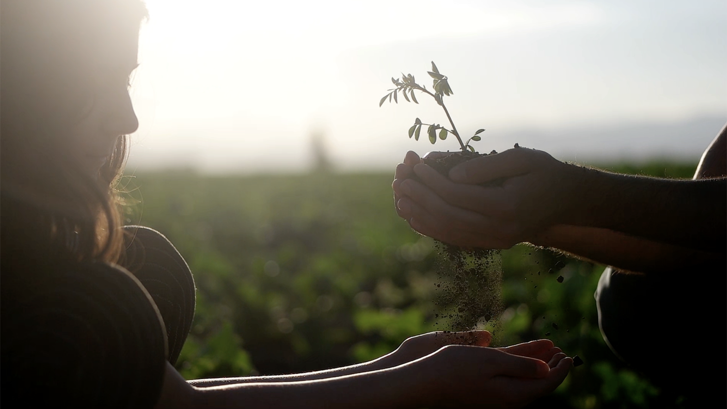 A young girl standing in a farm field with cupped hands extended to receive a plant seedling and soil from an adult.