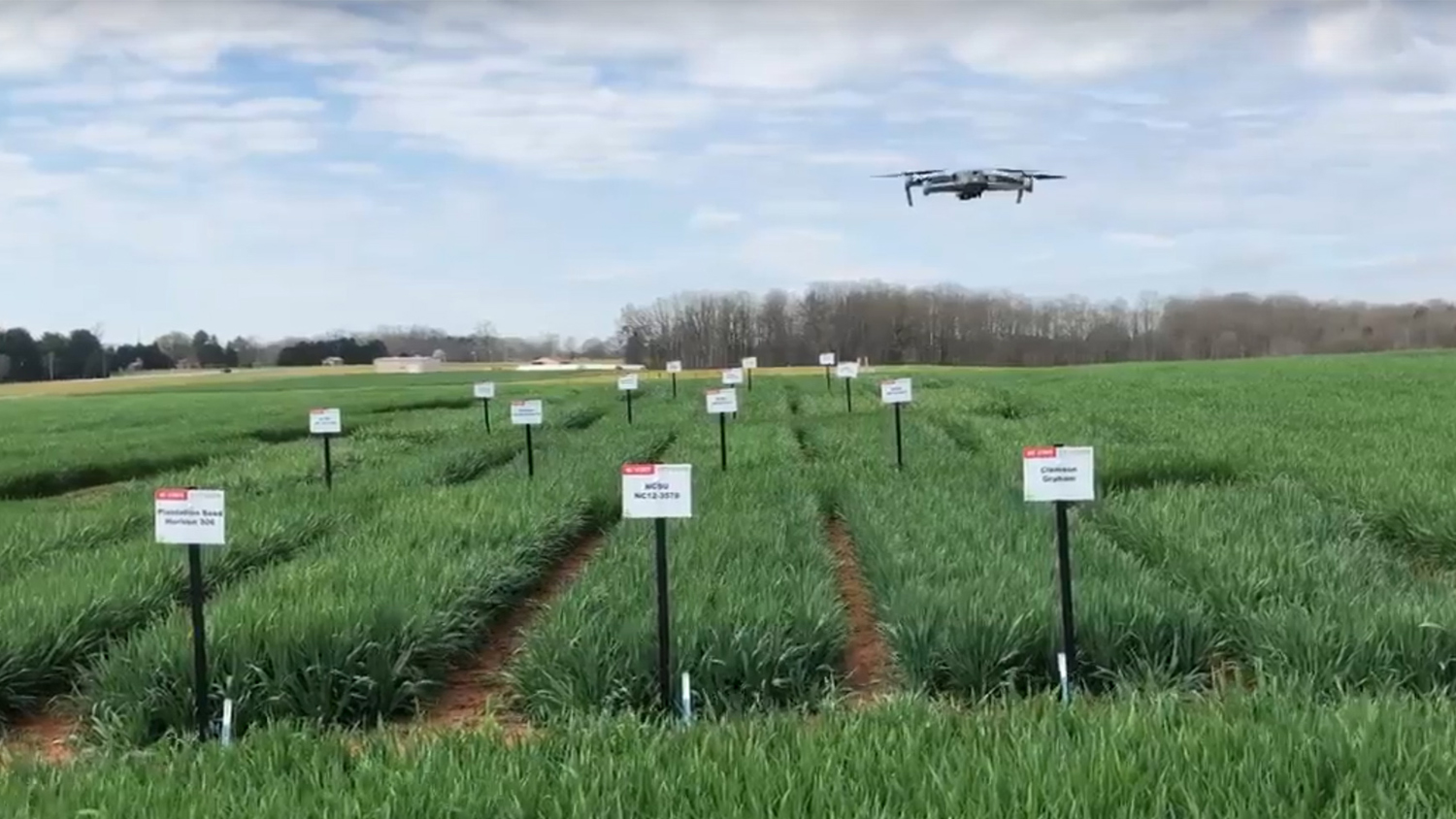 A drone hovers over farm research plots as part of NC State Extension's Virtual Small Grains Field Day in 2020.