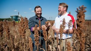 Randy Weisz and Wes Everman in sorghum field