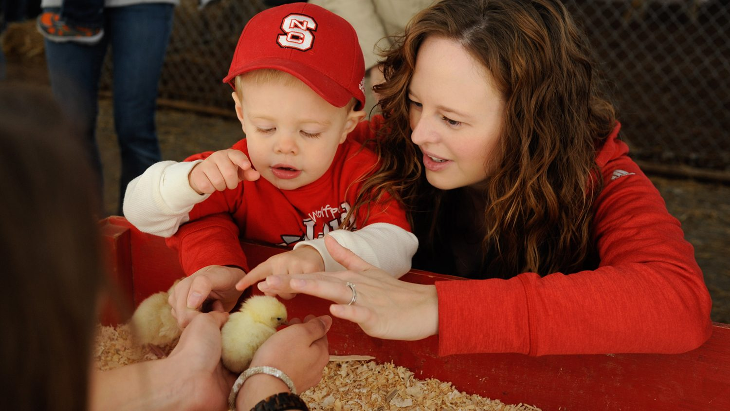 A young child and a woman petting baby chickens.